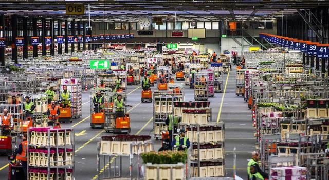 Cách quốc gia có diện tích chỉ bằng 1/8 Việt Nam chi phối ngành hoa 100 tỷ USD thế giới: Đầu tư công nghệ, giao dịch hoa như cổ phiếu - Ảnh 6.