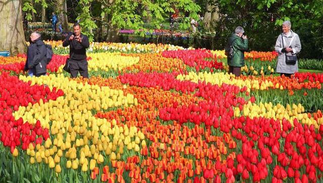 Cách quốc gia có diện tích chỉ bằng 1/8 Việt Nam chi phối ngành hoa 100 tỷ USD thế giới: Đầu tư công nghệ, giao dịch hoa như cổ phiếu - Ảnh 9.