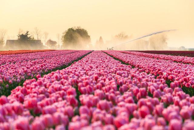 Cách quốc gia có diện tích chỉ bằng 1/8 Việt Nam chi phối ngành hoa 100 tỷ USD thế giới: Đầu tư công nghệ, giao dịch hoa như cổ phiếu - Ảnh 10.