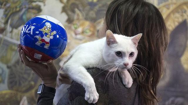 Mèo tiên tri dự đoán Nga thắng trận mở màn World Cup 2018 - Ảnh 1.