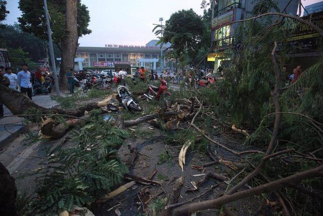 Cây cổ thụ bật gốc đè xe máy trên phố Hà Nội, 5 người bị thương - Ảnh 6.