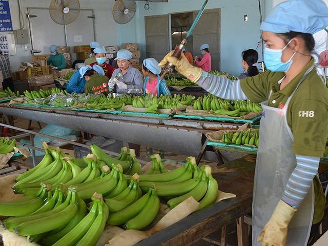 Mỹ-Trung ăn miếng trả miếng: Hàng Việt bị vạ lây - Ảnh 1.