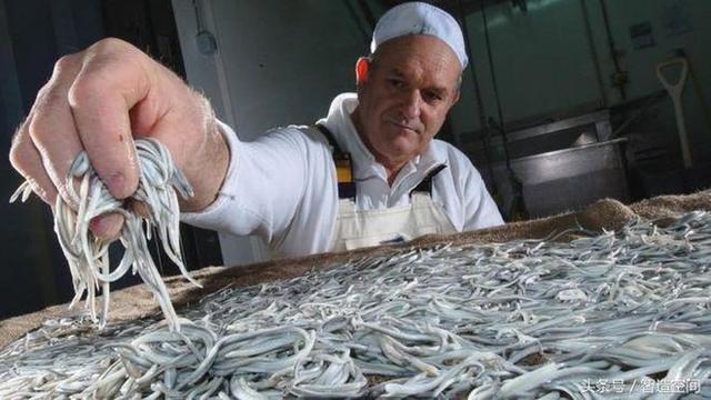 Lươn non Tây Ban Nha xấu xí, nhạt nhẽo nhưng có giá nghìn Euro - Ảnh 1.