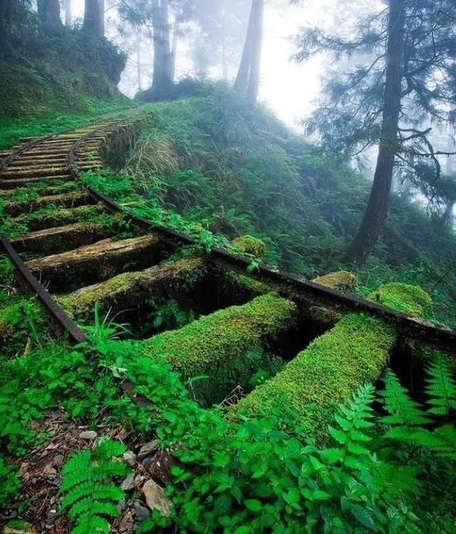 Những minh chứng khiến bạn ngỡ ngàng trước sức sống của tự nhiên bất chấp tác động của con người: Thiên nhiên luôn có cách để vượt qua mọi thứ - Ảnh 13.