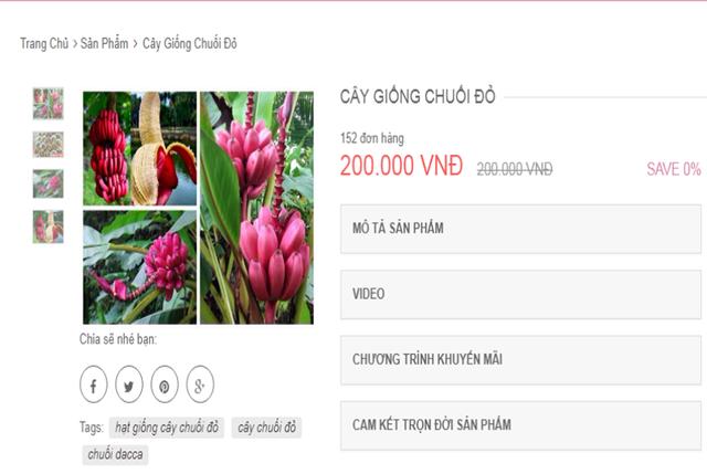 Từ chuyện cơn sốt chuối đỏ siêu lạ 600.000 đồng/kg - Ảnh 2.