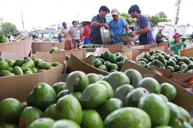 Xuất khẩu nông sản tăng mạnh, giá lúa gạo Việt Nam vượt Thái Lan, Ấn Độ - Ảnh 2.