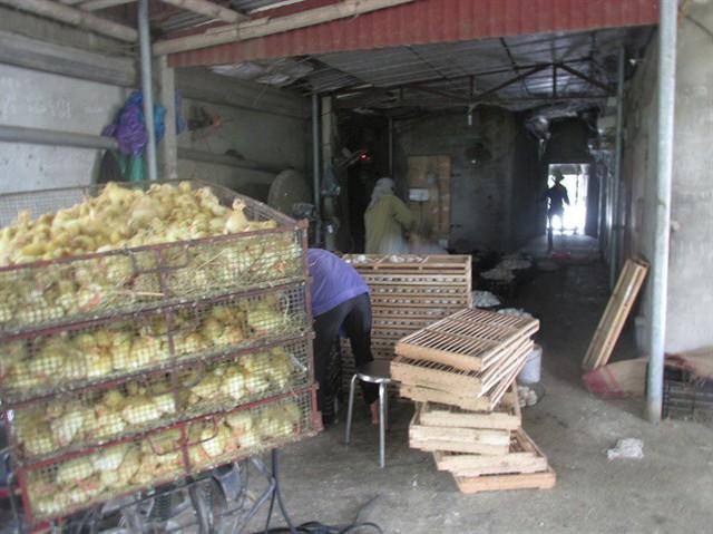 Thường xuyên nuôi 8.000 vịt sinh sản, bỏ túi 8 triệu đồng/ngày - Ảnh 1.