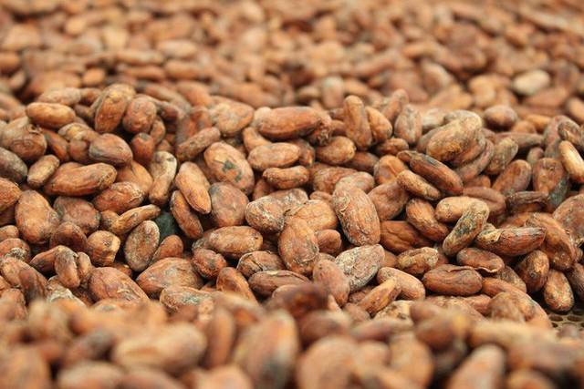 Hành trình biến hạt ca cao thành món chocolate vạn người mê qua lời kể của người thợ lành nghề - Ảnh 9.