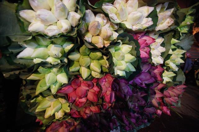 Chùm ảnh: Hoa sen thống lĩnh tại chợ đêm Quảng Bá - Ảnh 4.