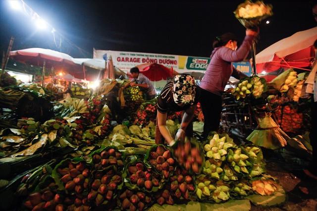 Chùm ảnh: Hoa sen thống lĩnh tại chợ đêm Quảng Bá - Ảnh 5.