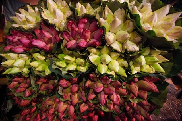 Chùm ảnh: Hoa sen thống lĩnh tại chợ đêm Quảng Bá - Ảnh 7.