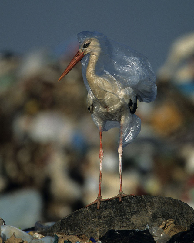 Cả Châu Á đang chung tay chống lại túi nylon, rác thải nhựa như thế nào? - Ảnh 2.