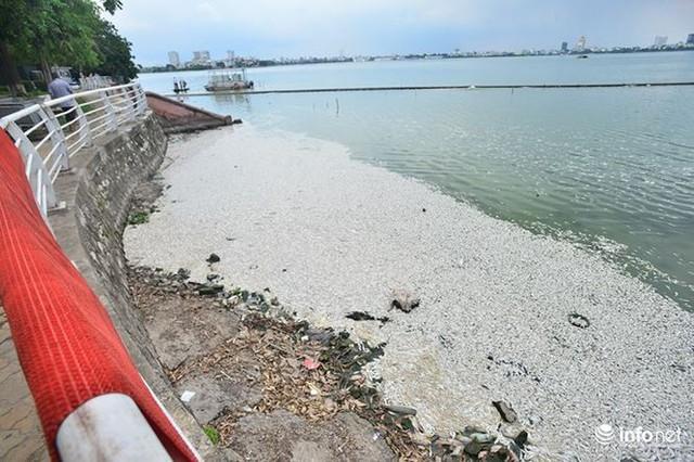 Mặc cá chết nổi trắng hồ Tây, người dân vẫn ra hồ tắm giải nhiệt   - Ảnh 1.