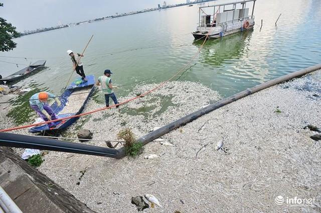 Mặc cá chết nổi trắng hồ Tây, người dân vẫn ra hồ tắm giải nhiệt   - Ảnh 3.