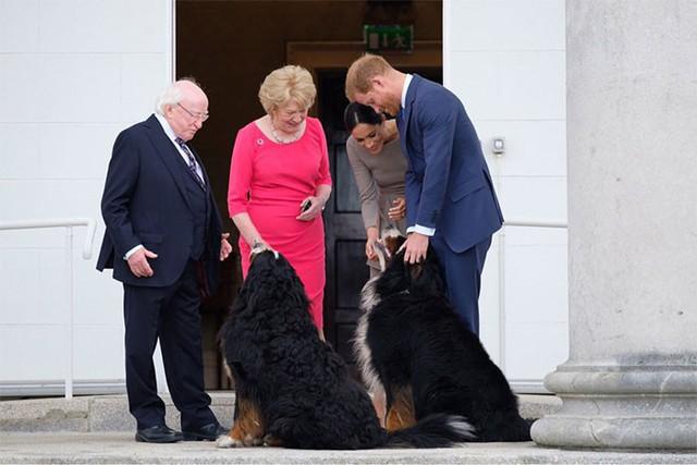 Đi đâu cũng dắt theo chó cưng, lâu lâu lại ngồi xe BMX: Những hình ảnh chứng minh Tổng thống Ireland là nguyên thủ dễ thương nhất thế giới - Ảnh 4.