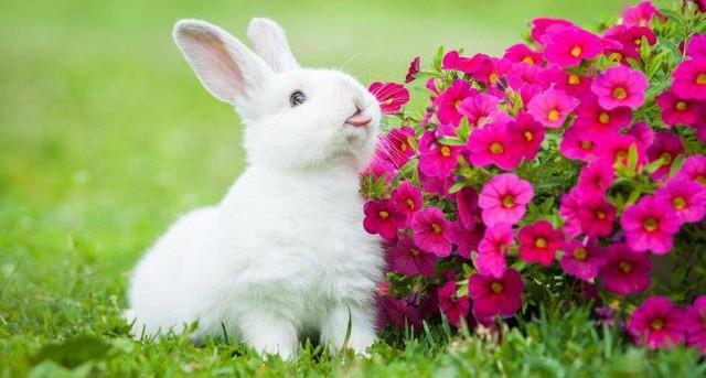 [Quy tắc đầu tư vàng] Câu chuyện ngụ ngôn đàn thỏ và bài học khắc cốt trong đầu tư chứng khoán - Ảnh 1.