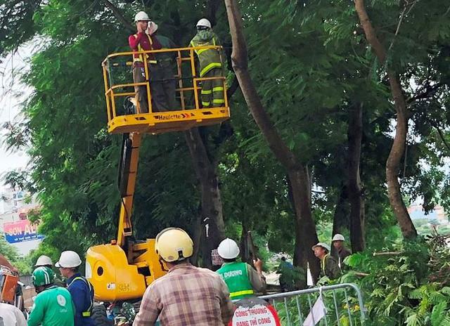 Ngăn đường chặt cây gây ùn tắc kéo dài  - Ảnh 2.