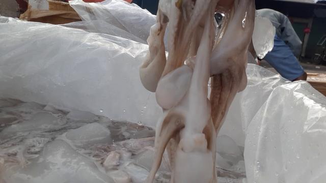 Ăn phải hải sản tẩy trắng, cơ thể bị hủy hoại thế nào? - Ảnh 4.