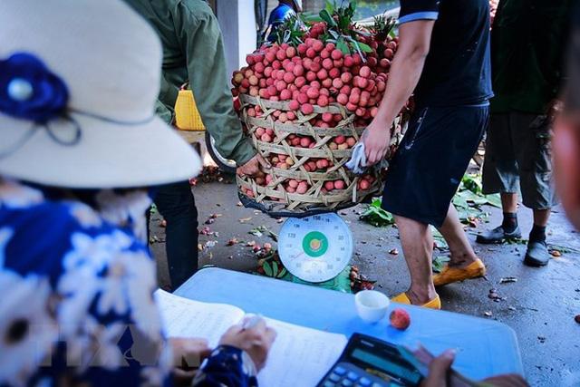 Hình ảnh vải thiều Lục Ngạn chín đỏ trong mùa thu hoạch - Ảnh 13.