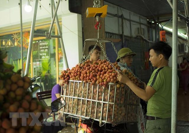 Hình ảnh vải thiều Lục Ngạn chín đỏ trong mùa thu hoạch - Ảnh 5.