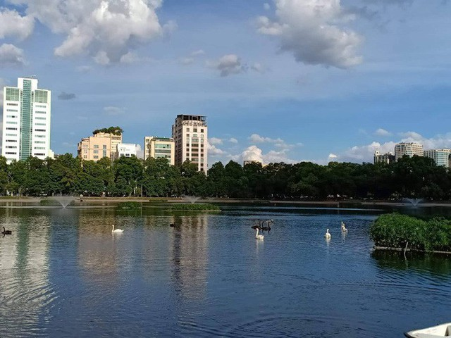 Đàn thiên nga ở hồ Thiền Quang vật lộn với trời nắng nóng 40 độ C ra sao? - Ảnh 7.