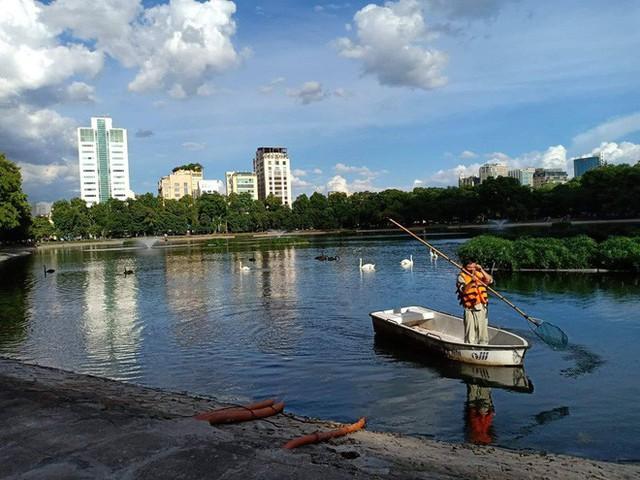 Đàn thiên nga ở hồ Thiền Quang vật lộn với trời nắng nóng 40 độ C ra sao? - Ảnh 8.