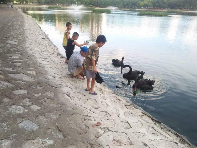 Đàn thiên nga ở hồ Thiền Quang vật lộn với trời nắng nóng 40 độ C ra sao? - Ảnh 10.