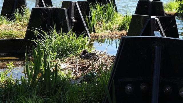 Công viên nổi độc đáo được làm từ rác thải nhựa ở Hà Lan: Địa điểm tuyệt vời để tụ tập bạn bè và thư giãn - Ảnh 4.