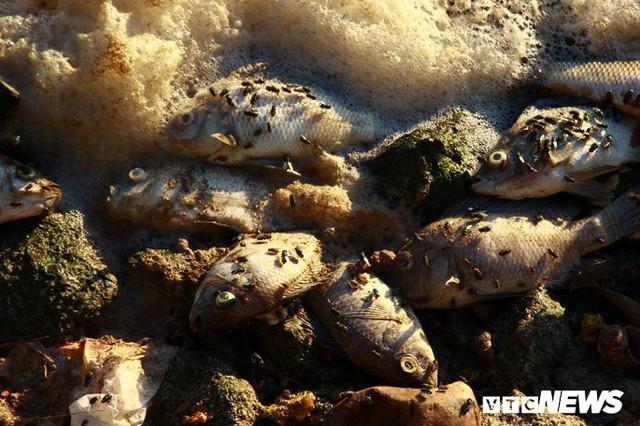 Hồ Tây ngập ngụa rác thải và cá chết, dân Thủ đô vẫn nô nức rủ nhau bơi lội - Ảnh 2.