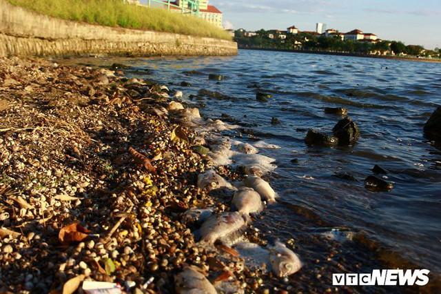 Hồ Tây ngập ngụa rác thải và cá chết, dân Thủ đô vẫn nô nức rủ nhau bơi lội - Ảnh 3.