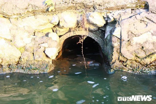 Hồ Tây ngập ngụa rác thải và cá chết, dân Thủ đô vẫn nô nức rủ nhau bơi lội - Ảnh 4.