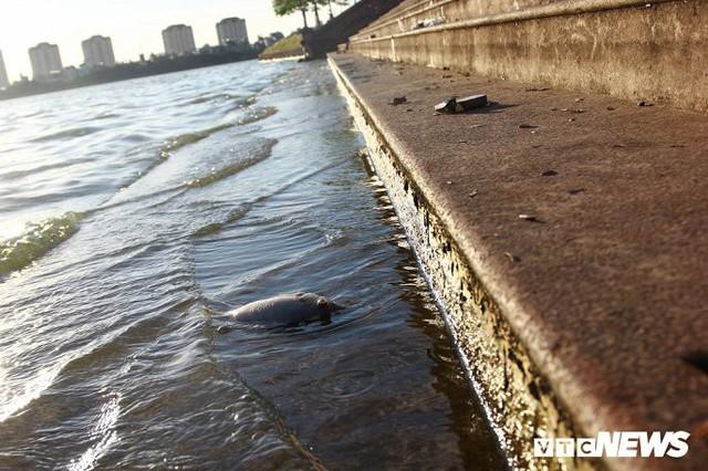 Hồ Tây ngập ngụa rác thải và cá chết, dân Thủ đô vẫn nô nức rủ nhau bơi lội - Ảnh 5.
