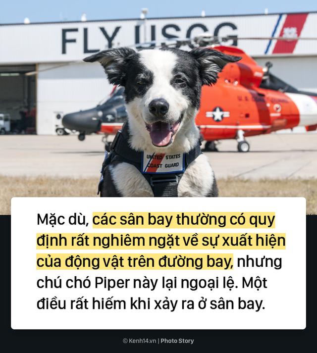 Chú chó quốc dân tại sân bay Michigan ở Mỹ - Ảnh 4.