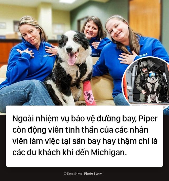 Chú chó quốc dân tại sân bay Michigan ở Mỹ - Ảnh 8.