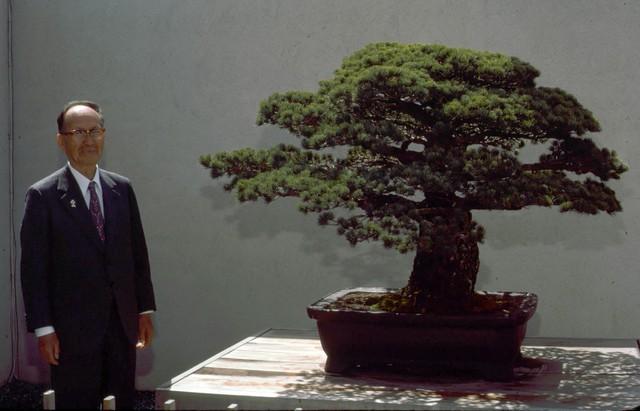 Câu chuyện của cây bonsai Nhật Bản 400 tuổi vẫn sống sót sau khi bom nguyên tử thả xuống Hiroshima - Ảnh 6.