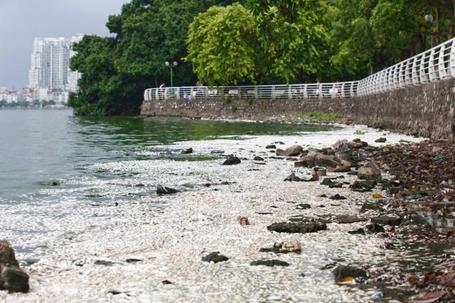 Cá Hồ Tây chết hàng loạt, mùi hôi nồng nặc  - Ảnh 2.
