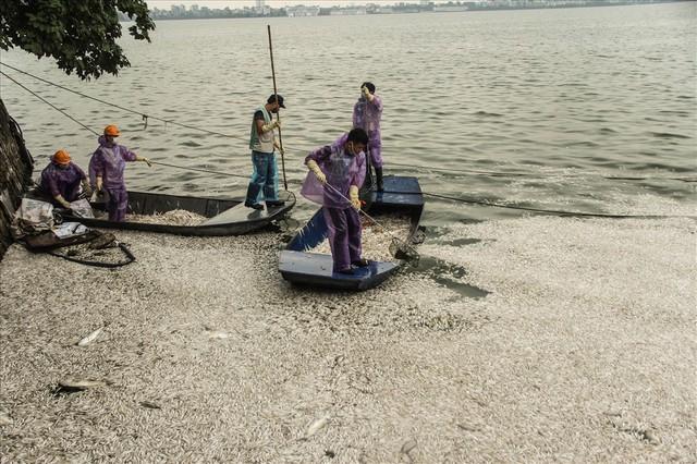 Phun thuốc khử độc ở Hồ Tây sau hàng chục tấn cá chết  - Ảnh 2.