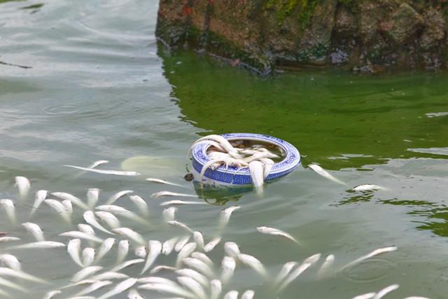 Cá Hồ Tây chết hàng loạt, mùi hôi nồng nặc  - Ảnh 11.