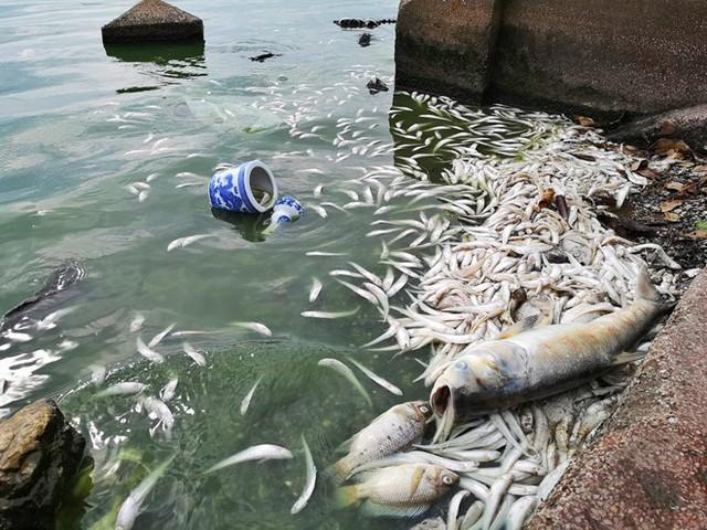 Cá Hồ Tây chết hàng loạt, mùi hôi nồng nặc  - Ảnh 10.