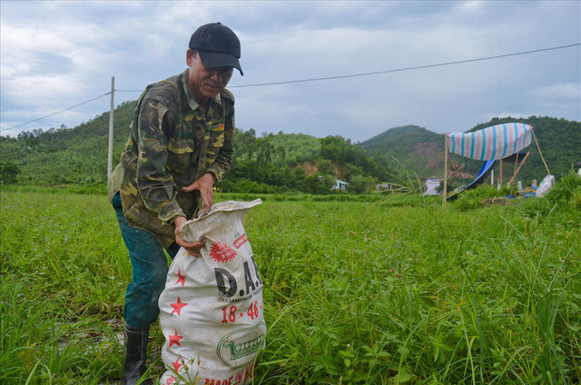 Đà Nẵng: 600 tấn dưa hấu hư hại do ngập úng - Ảnh 2.