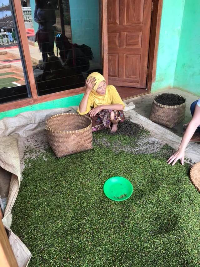 Giá hồ tiêu trong nước bị sức ép giảm từ vụ mùa đang thu hoạch ở Indonesia - Ảnh 1.