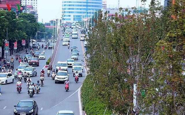 Những hàng cây Phong trên đường phố Hà Nội ngả màu khi Thu sang - Ảnh 1.