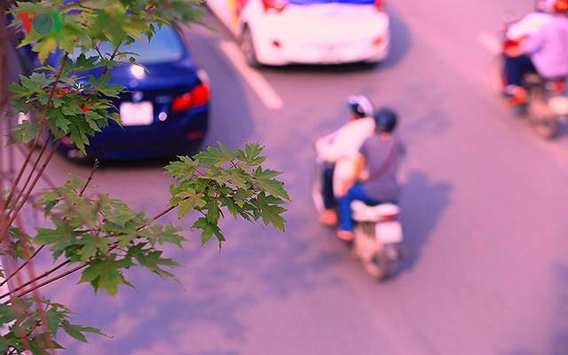 Những hàng cây Phong trên đường phố Hà Nội ngả màu khi Thu sang - Ảnh 12.