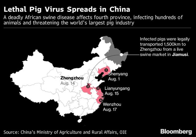 Dịch cúm lợn châu Phi có nguy cơ lây lan tới Việt Nam sau khi hoành hành ở Trung Quốc - Ảnh 1.