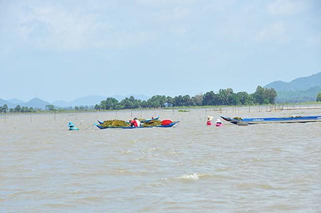 Vỡ đê bao ở An Giang khiến hơn trăm ha lúa chìm trong nước - Ảnh 1.