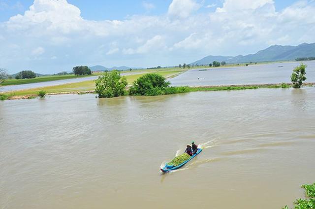 Vỡ đê bao ở An Giang khiến hơn trăm ha lúa chìm trong nước - Ảnh 4.