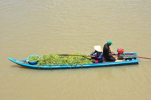 Vỡ đê bao ở An Giang khiến hơn trăm ha lúa chìm trong nước - Ảnh 6.
