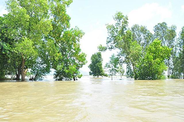 Vỡ đê bao ở An Giang khiến hơn trăm ha lúa chìm trong nước - Ảnh 7.