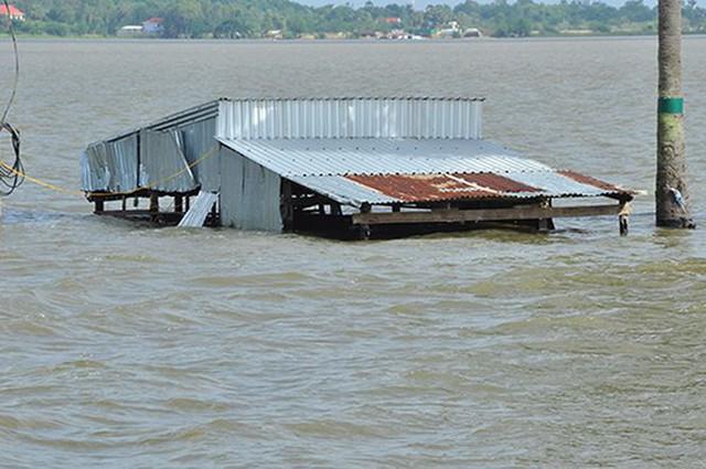 Vỡ đê bao ở An Giang khiến hơn trăm ha lúa chìm trong nước - Ảnh 8.