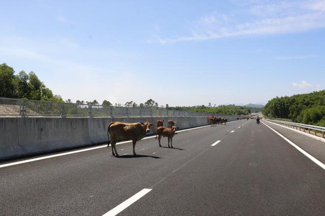 Cận cảnh xa lộ 34.500 tỉ đồng xe bốn bánh đi lộc cộc, lộc cộc - Ảnh 15.